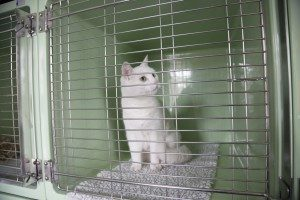 dierenverzorging